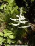 玉置山の花